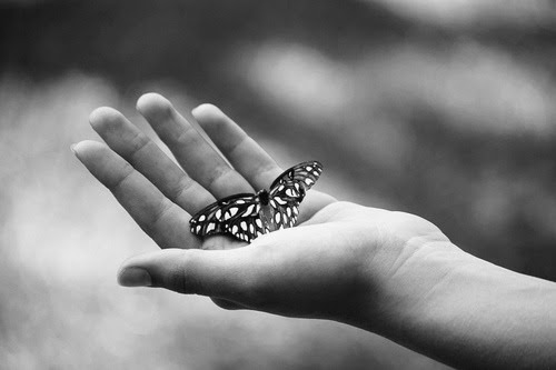 solitaria:  (by grandma hands)  Never to be captured, but only to be set free.