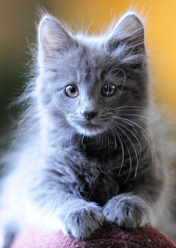 Pet of the week Xavier