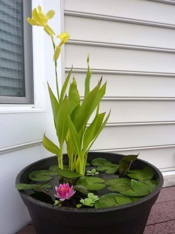 mini-pond-in-a-pot-woohome-3