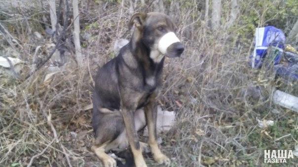 Нелюди: в Новороссийске живодеры перемотали пасть собаке скотчем и бросили умирать