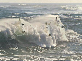 whitehor