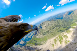perierga.gr - Πτήση πάνω από τις Άλπεις μέσα από τα μάτια ενός αετού!