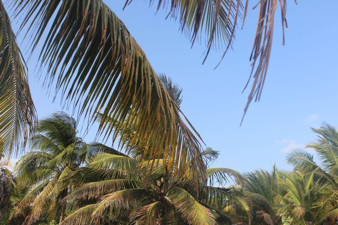 photo 15-tulum quintana roo ruines mayas-plage_zps1odunpuj.jpg