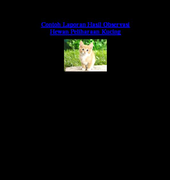 Contoh Teks Laporan Hasil Observasi Tentang Kucing Anggora Kumpulan Contoh Laporan