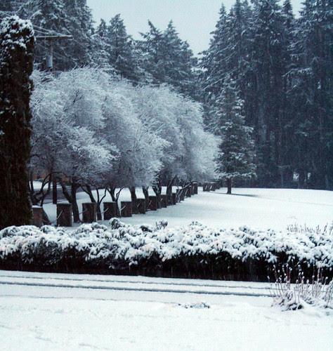 snowing in Edmonds