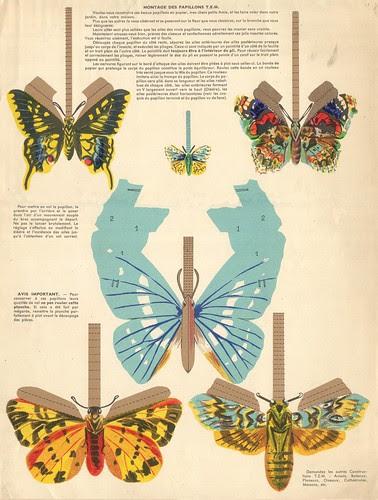 papillons tem  verso
