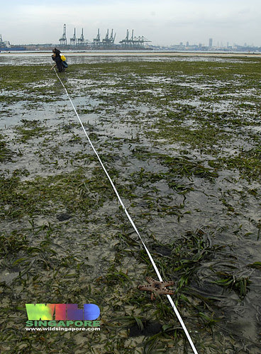 TeamSeagrass at work