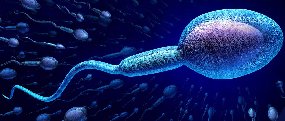 Resultado de imagem para espermatozoide