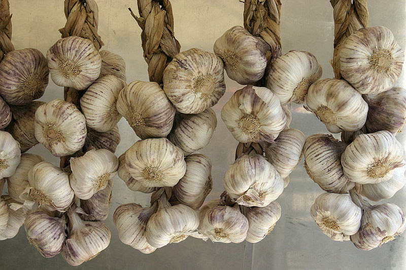 File:Allium sativum - Garlic - 01.jpg