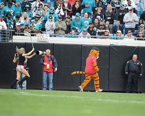 Tiger chaser