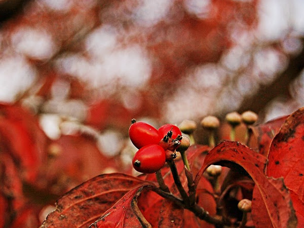 Shades of Autumn {Red}