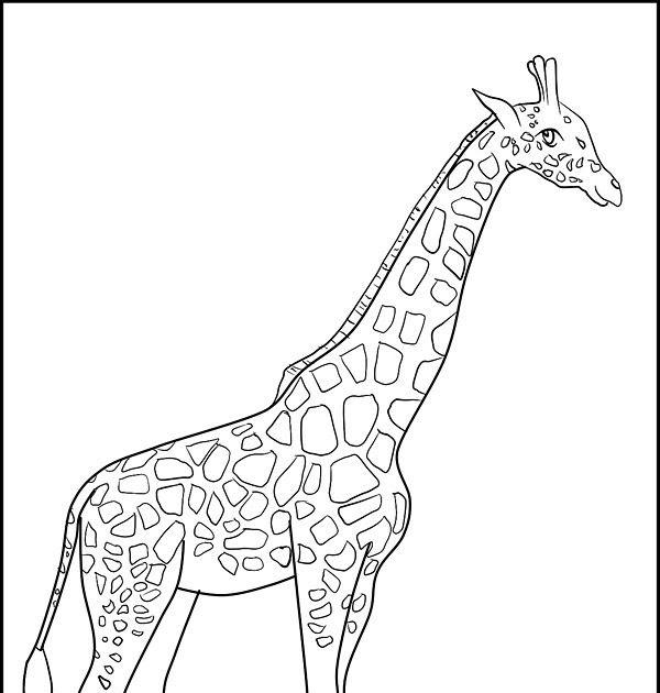 malvorlagen giraffe online  aglhk