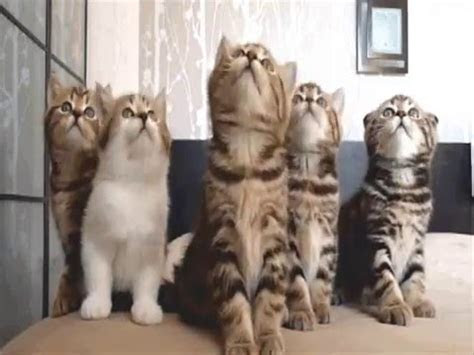 kumpulan foto kucing lucu bergerak youtube