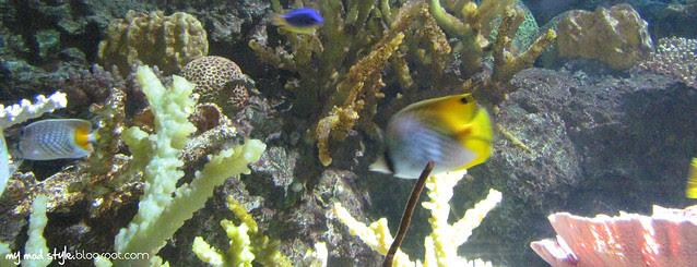 Denver Aquarium 6
