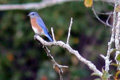 bluebird on  branch
