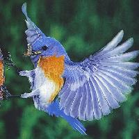 Swap-bot swap: Let's Fly Away! Postcard Swap