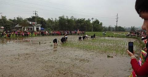 Xuống đồng thi cấy lúa Lễ hội lồng thồng Bủng Kham 2019 Đại Đồng Tràng Định