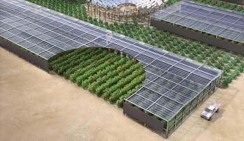 Floresta no deserto vai começar com oásis artificial