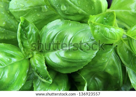 fresh basil, background - stock photo