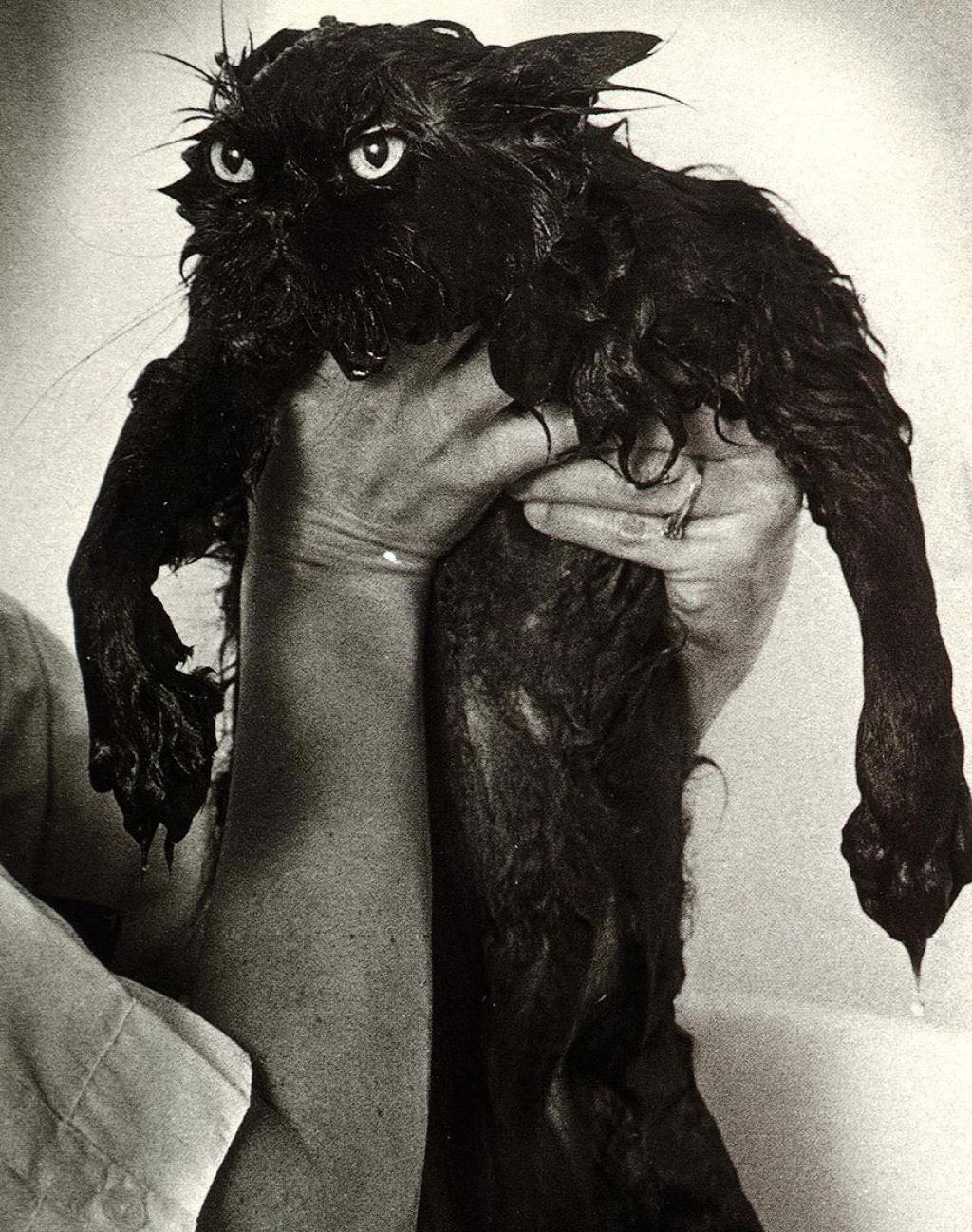 Fotografias engraçadas de gatos tomando banho 19