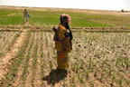 Using less water in Mali