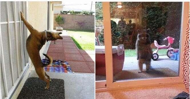 Imagens de animais que querem ir para dentro de casa