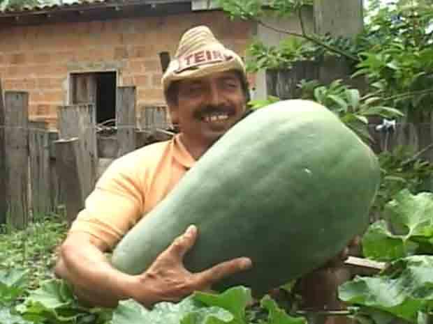 Pedreiro Osmarim Almeida carrega pepino gigante de 25 quilos (Foto: Reprodução/TV Liberal)