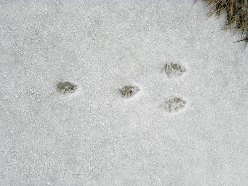 DSCN3598 Bunny Tracks