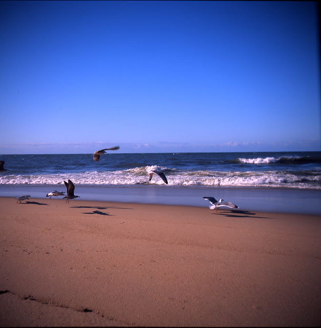 Chassing seagulls