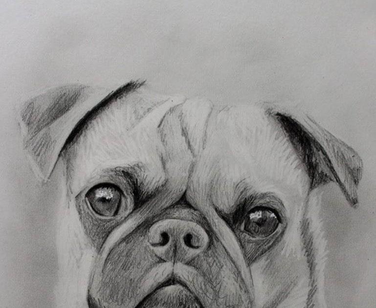 hund gesichter zeichnen  tier malen
