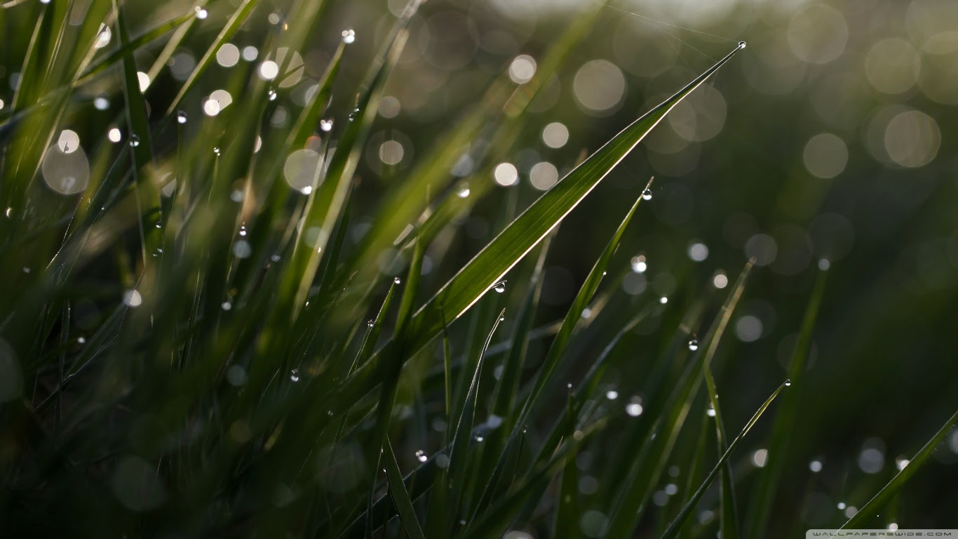 Grass Bokeh Macro ❤ 4K HD Desktop Wallpaper for • Wide & Ultra