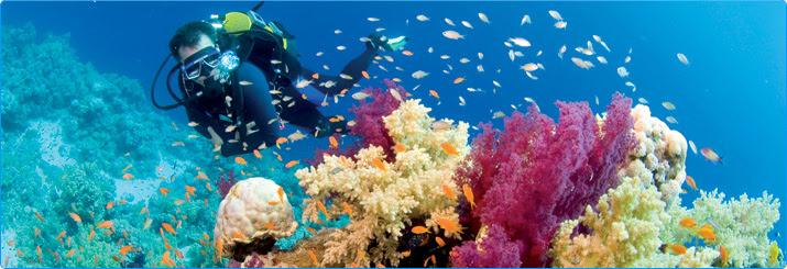 Rooney vacation spot of Sharm El-Sheikh under water tourism