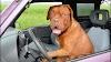 Tesla hace más cómodos los coches para los perros