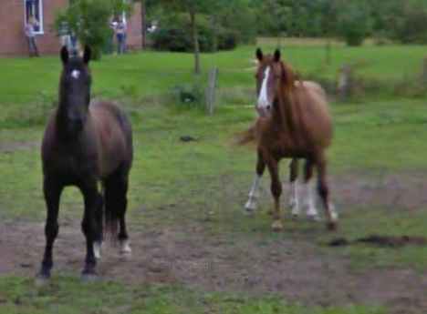Google Maps Street View Captures A Five Legged Horse In