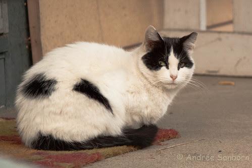 Feral Cats  -3.jpg