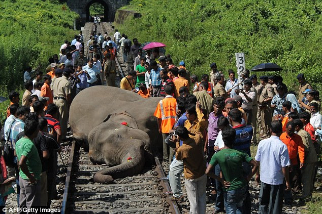 Critical: This male elephant lies dying on the tracks after being hit by a high-speed passenger train