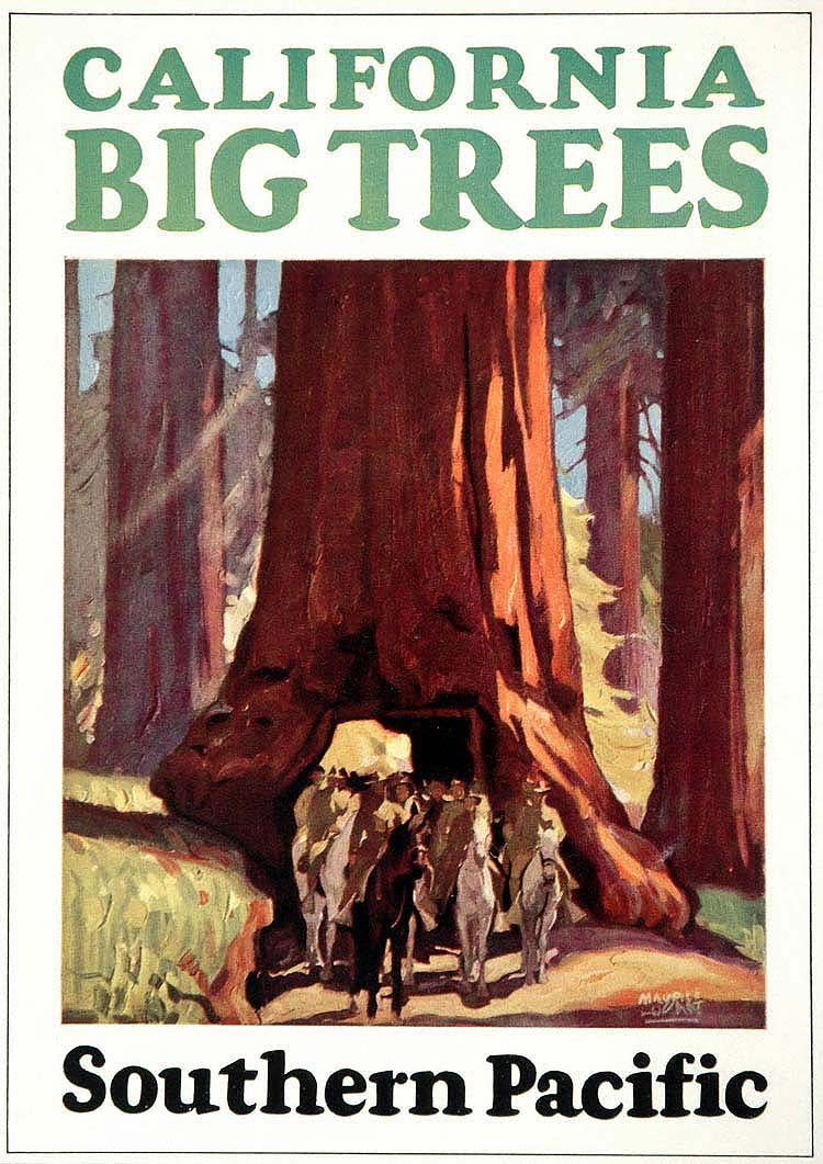 California Big Trees, Maurice Logan, 1933