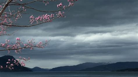 Full HD Wallpaper sakura overcast cloud blurry japan