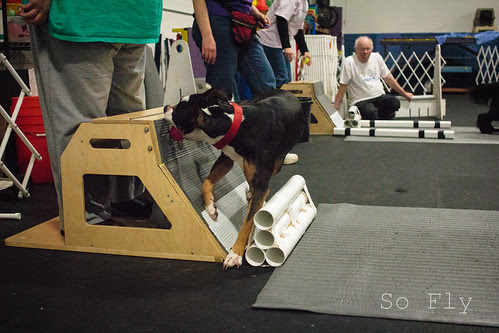 Flyball Practice April 2013-1529