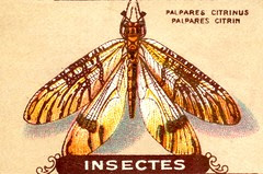insecte 4