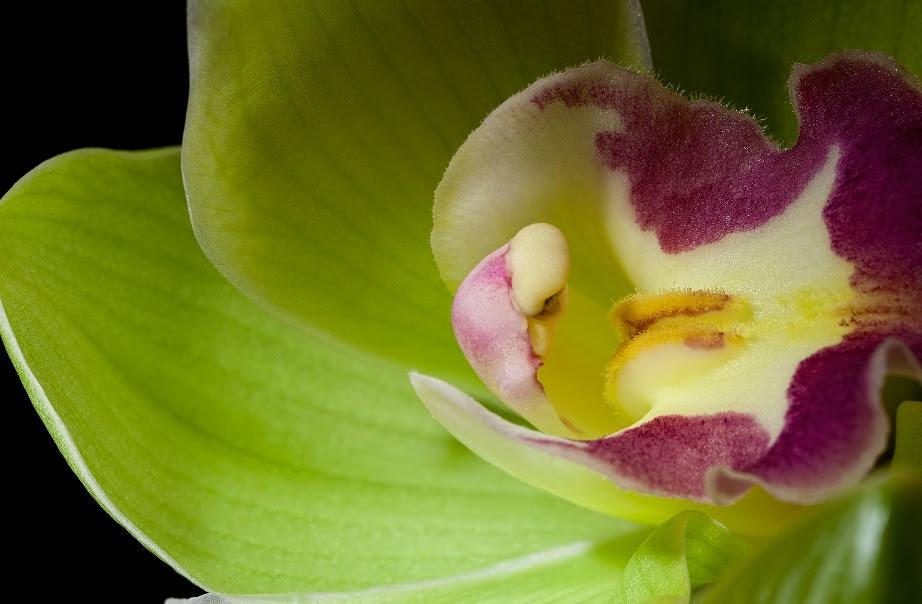 Και μιας και μιλάμε για ακριβά, η ορχιδέα Shenzhen Nongke, πουλήθηκε σε άγνωστο αγοραστή στην τιμή των 180.000 ευρώ το 2005 και είναι ένα λουλούδι που δημιουργήθηκε εργαστηριακά.