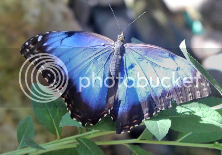photo butterflyGailHiggins.jpg