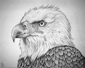 bald eagle portrait  techdrakonic  deviantart