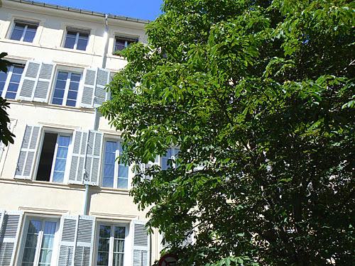 arbre et immeuble.jpg
