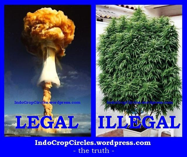 cannabis illegal and nuclear legal