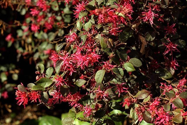 spring (red i)