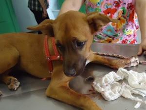 Cachorro teve mandíbula quebrada (Foto: Divulgação / Fábia Mazza)