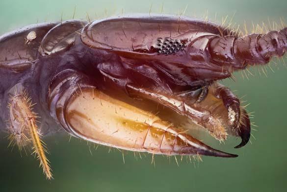 Εκπληκτικές macro φωτογραφίες εντόμων (5)