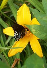 Flower_Butterfly_610