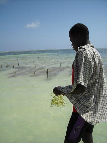 Ragazzo mi mostra l'alga che coltivano